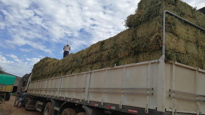 Grupo de productores de Chaco exportan a Bolivia más de 18.000 kilos de alfalfaUna primera carga con 1.000 fardos de entre 18 y 20 kilos partió desde Las Breñas a Santa Cruz de la Sierra de la mano de AlfaGrup, un Grupo de Cambio Rural del INTA del sudoeste de Chaco. Los compradores del país vecino comercializarán el fardo con productores de distintas cooperativas lecheras de la región.
