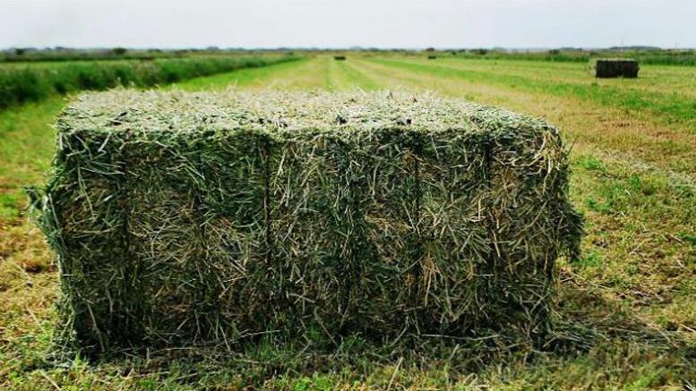 Inversión privada proyecta exportar alfalfa santiagueña a Dubai y Emiratos ÁrabesCon la más alta tecnología, se elaborará un producto que mantiene su   calidad proteica y que mantiene ventajas con relación a otros países   exportadores.