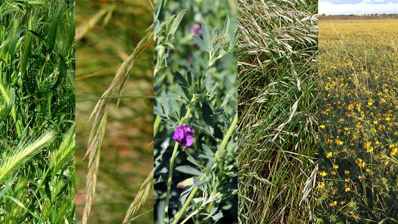 ¿Qué pasturas se adaptan mejor en los suelos del norte de Buenos Aires?Un trabajo desarrollado por profesionales del Grupo Forrajeras del INTA Pergamino identificó los ambientes de siembra más aptos para diferentes pasturas en esta región del país.