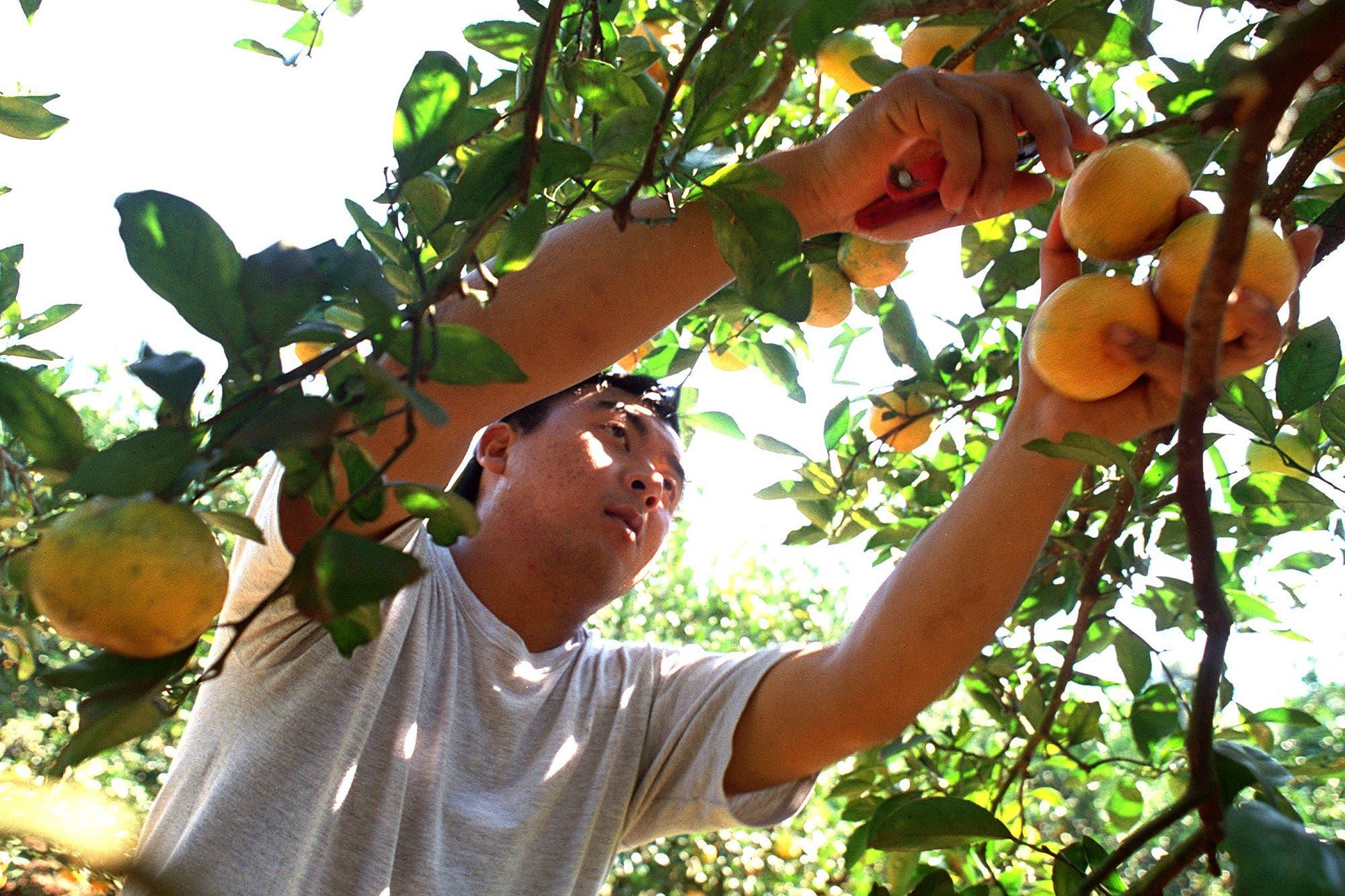 Baja de retenciones: el Consejo Agroindustrial pidió sumar a más productos de economías regionales